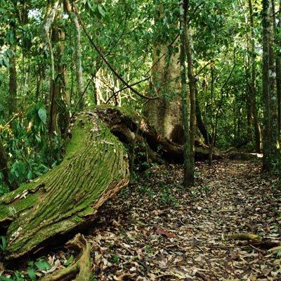 Budongo Forest Experience Uganda