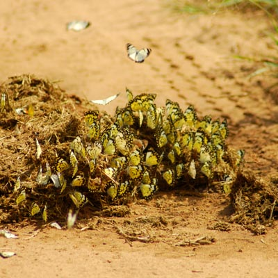 Butterflies Experience Uganda