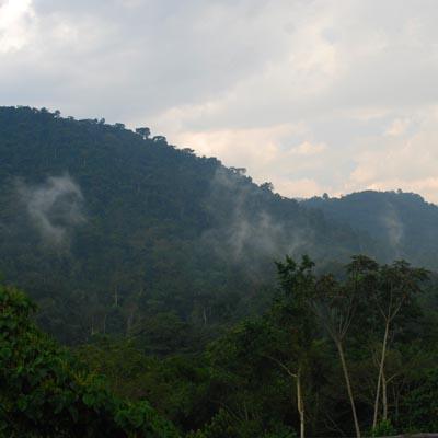 Bwindi Mist Experience Uganda