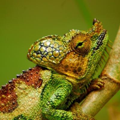 Chameleon Experience Uganda