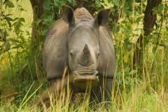 Rhino Ziwa Experience Uganda