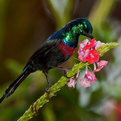 Sunbird Experience Uganda